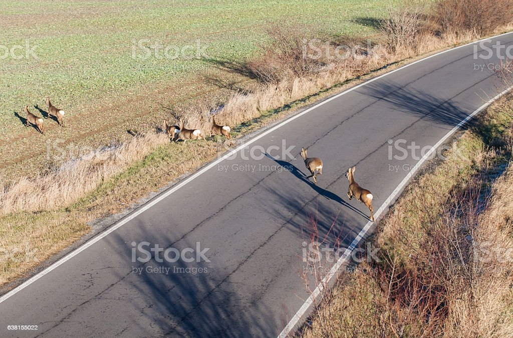 deers running on the field on winter time stock photo