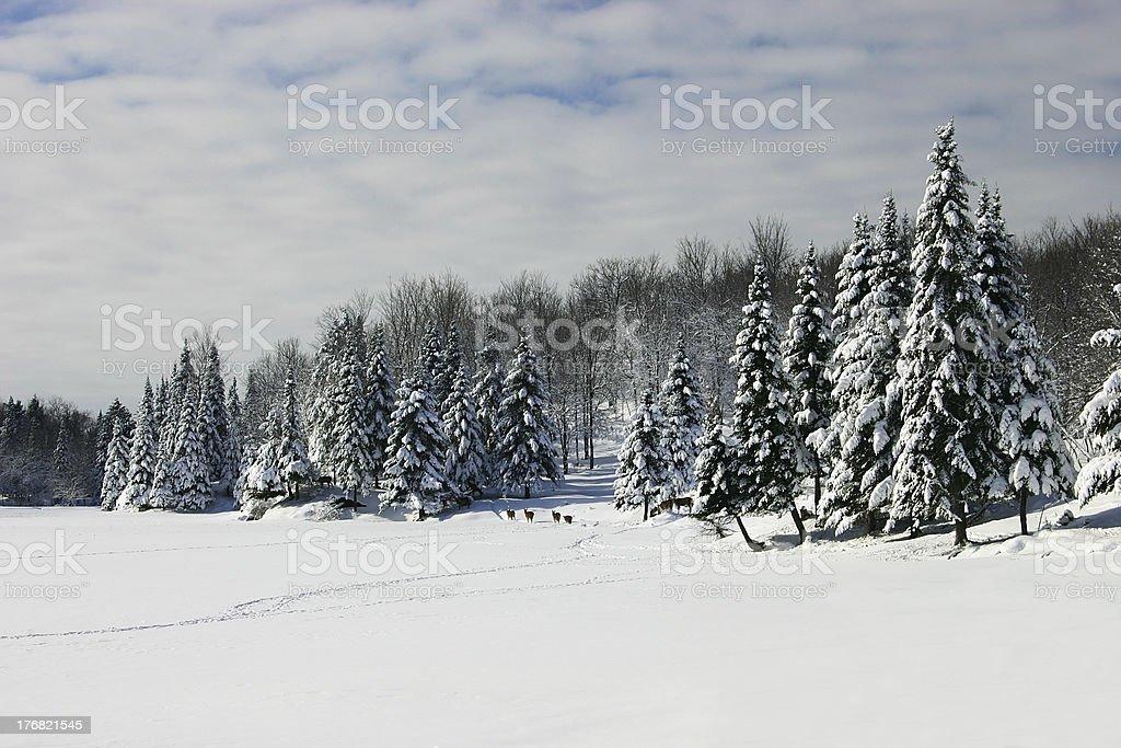 Deers Walking Across a Frozen Lake royalty-free stock photo