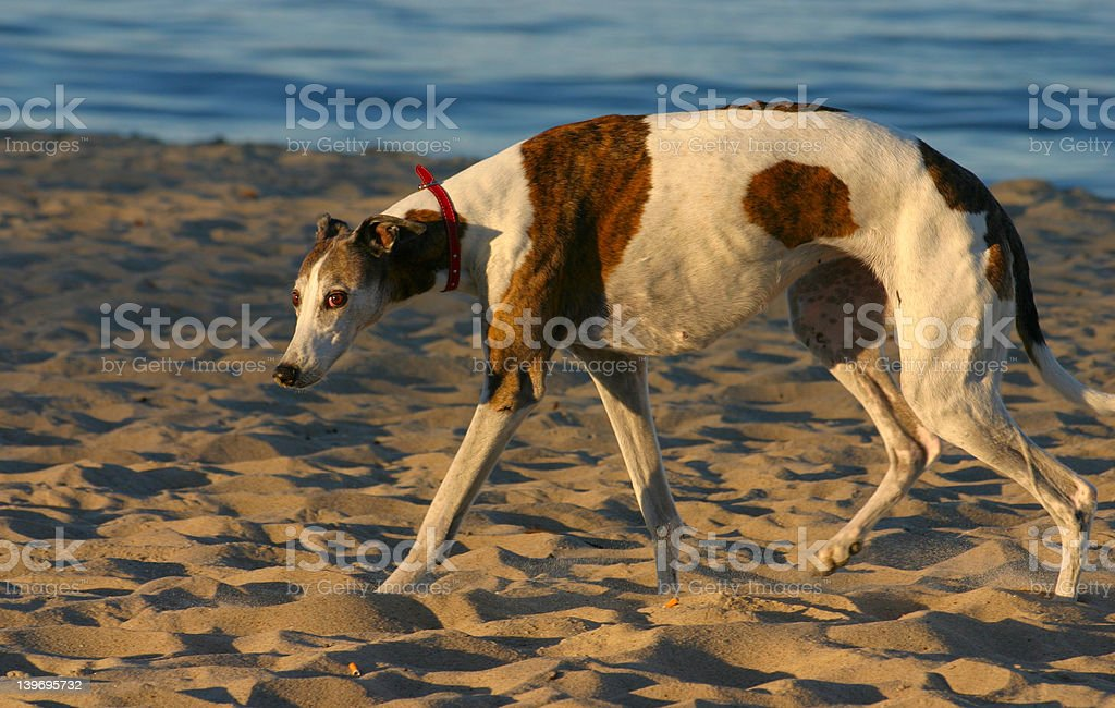 defeated dog looking towards the camera royalty-free stock photo