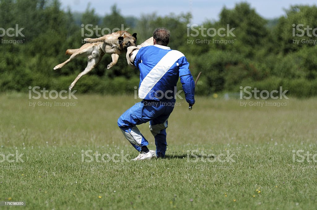 defense - dog sport stock photo