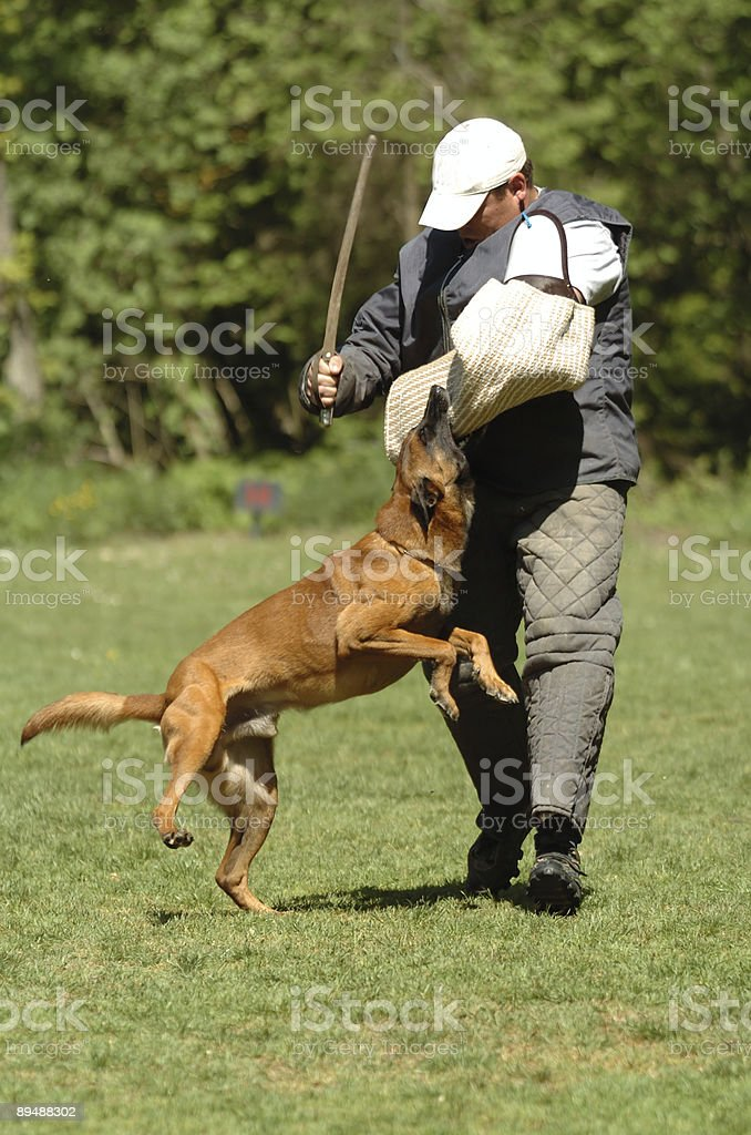 defense dog sport royalty-free stock photo