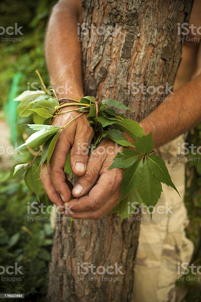 Defense trees royalty-free stock photo