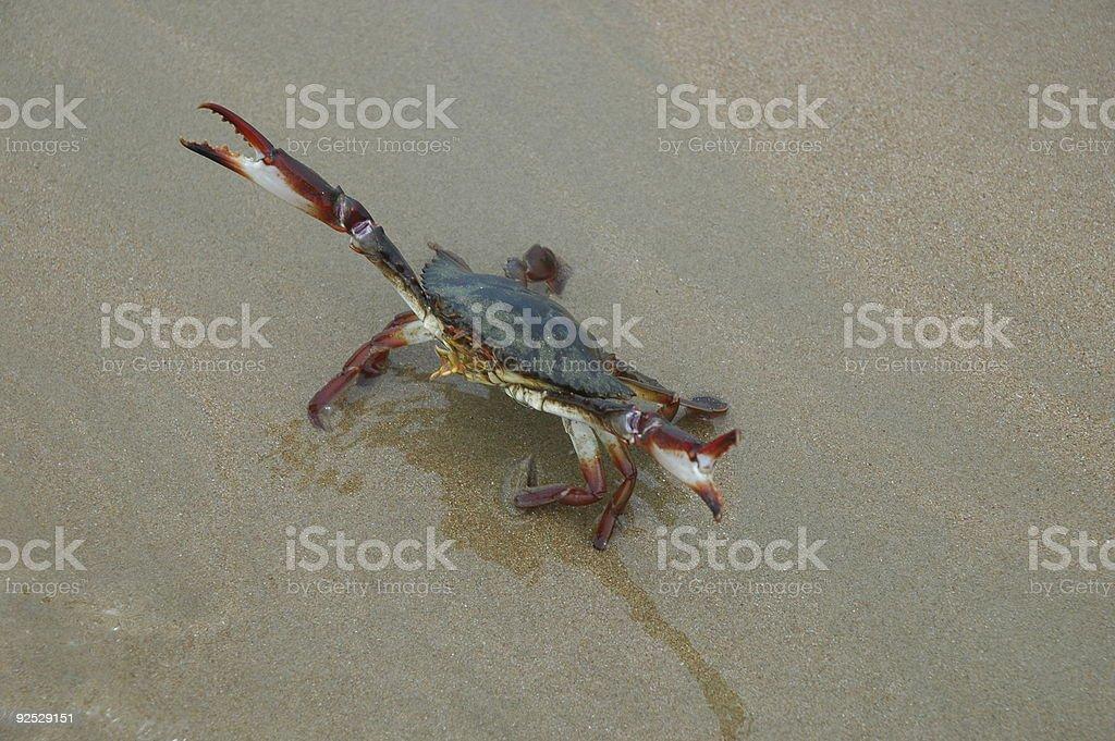 Defensive Crab stock photo
