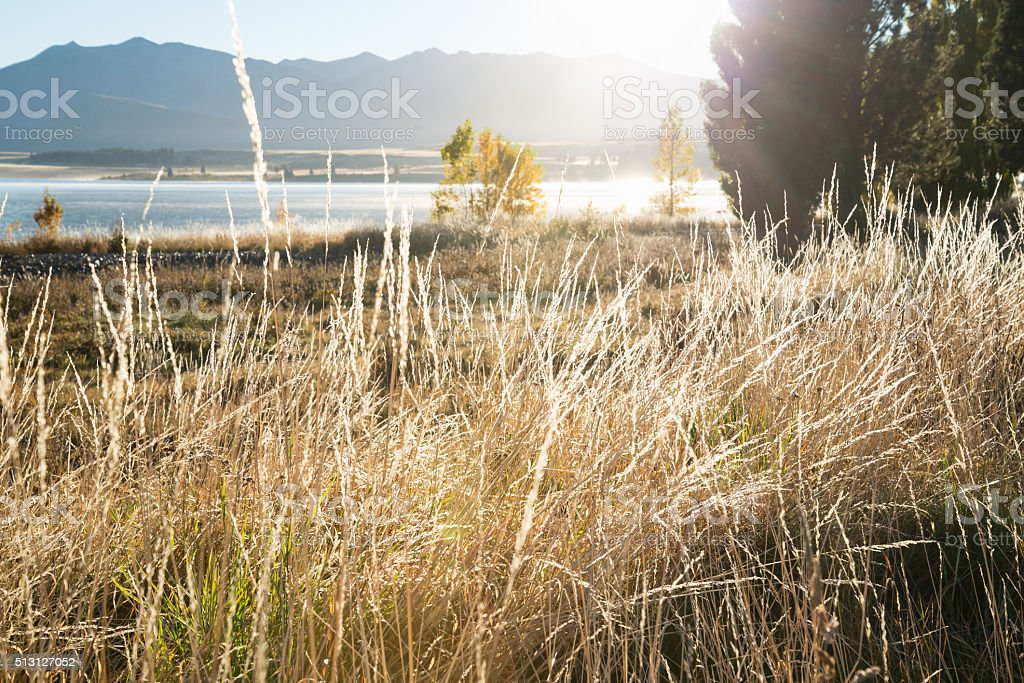 Defocus landscape background, wild grasses, scenery from lake Tekapo stock photo