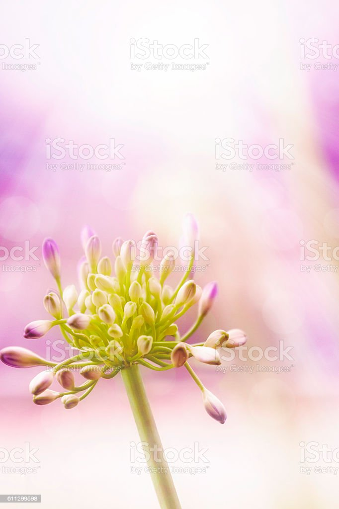 Defocused abstract floral background image stock photo