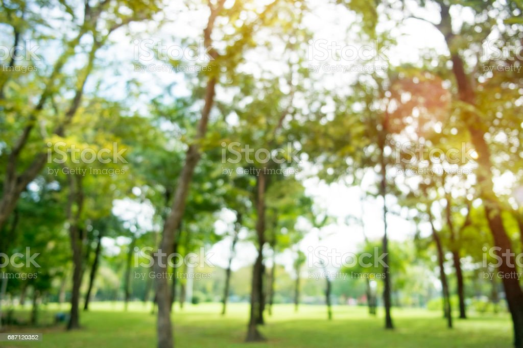 defocused bokeh background of garden trees in sunny day stock photo