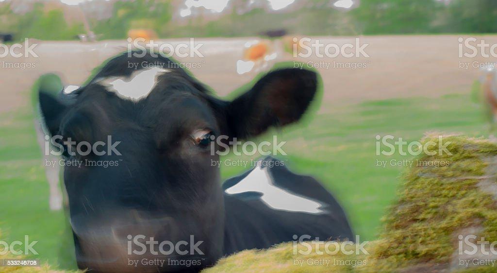 Defocused bull on pasture stock photo