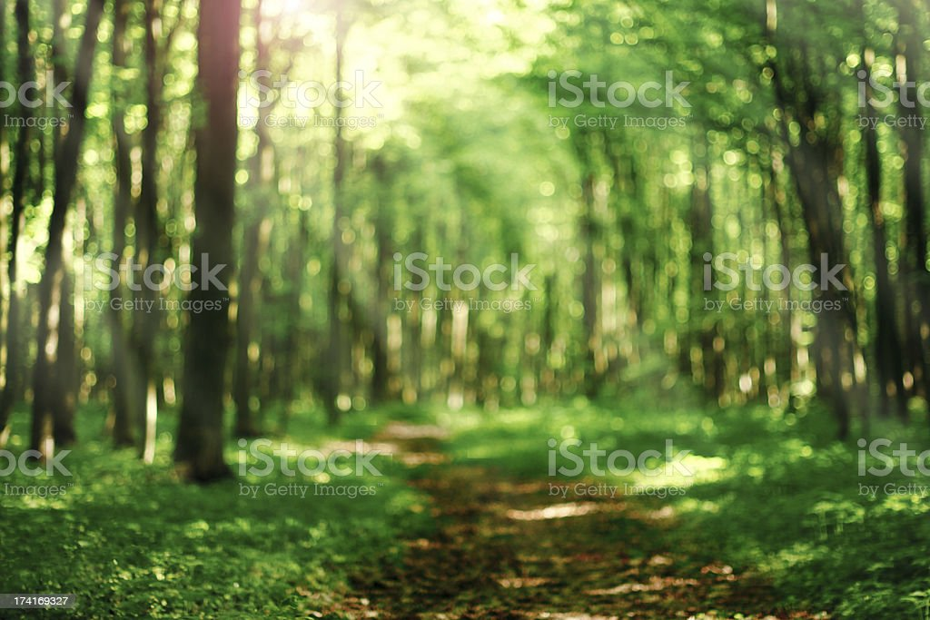 Defocused forest background stock photo