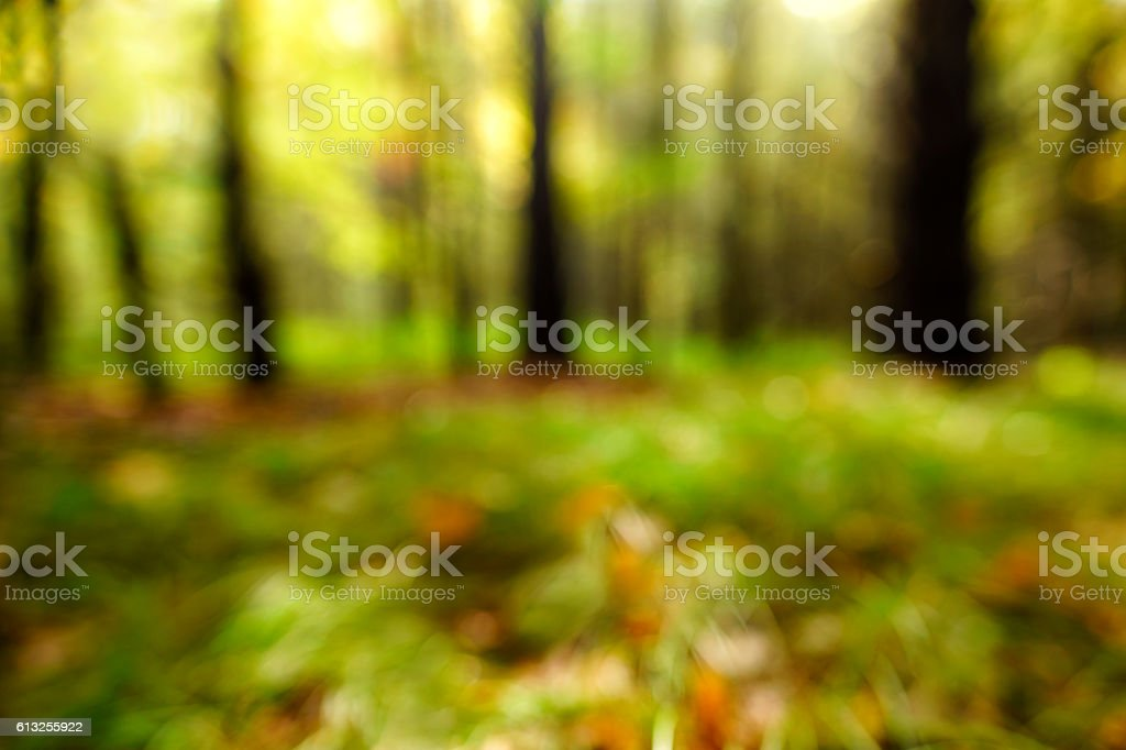 Defocused Forest Background stock photo