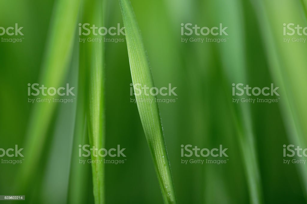 Defocused grass background stock photo