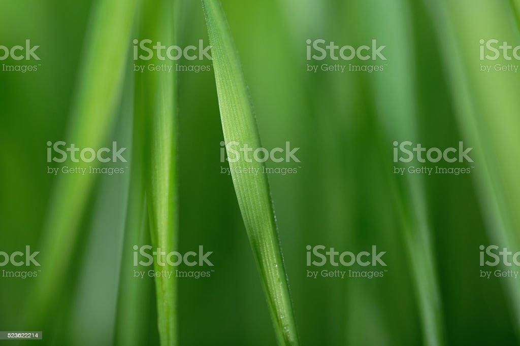 Defocused grass background stock photo