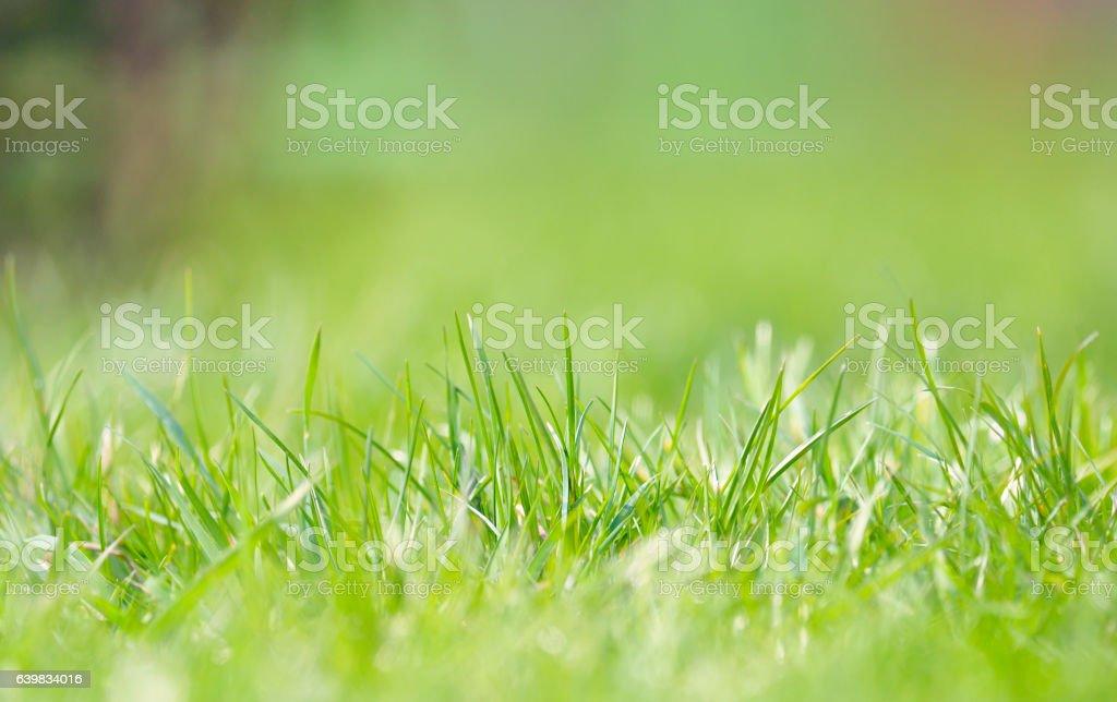 Defocused grass on field stock photo