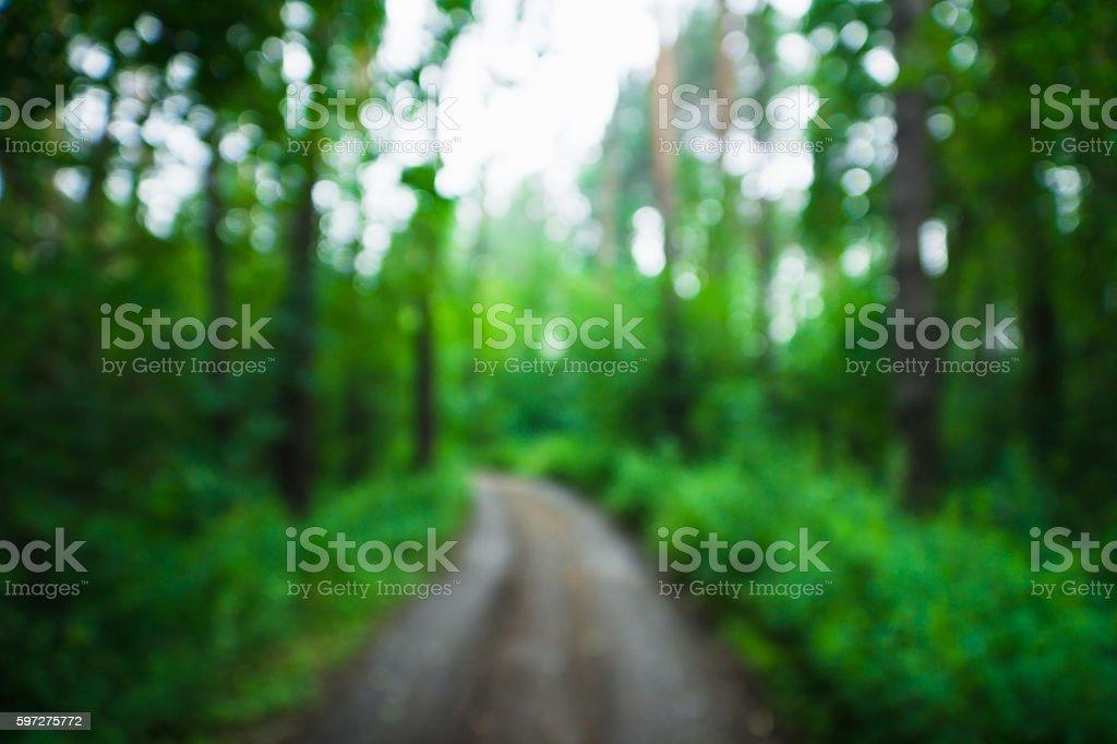 Defocused road through the forest stock photo