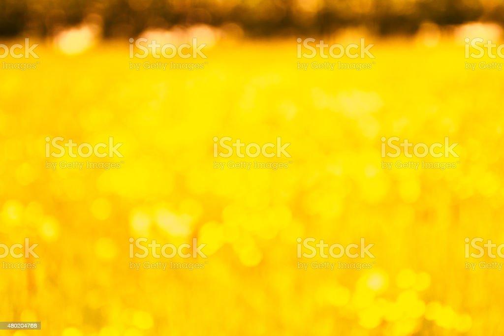 Defocused Summer Meadow in Sunlight stock photo