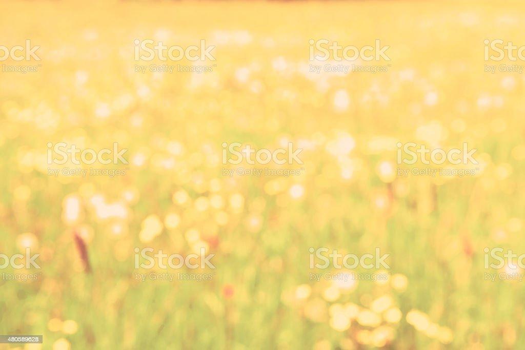 Defocused Summer Wildflower Meadow in Sunlight stock photo