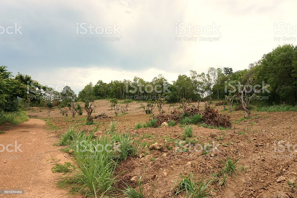 deforest in thailand stock photo
