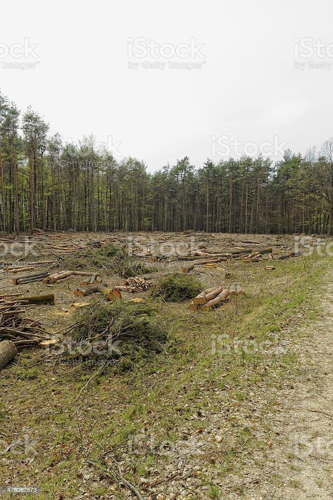 Deforestation and logging royalty-free stock photo