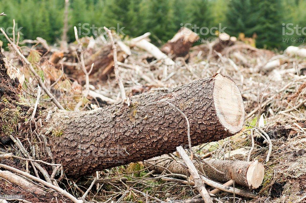 Deforestation Close-up royalty-free stock photo