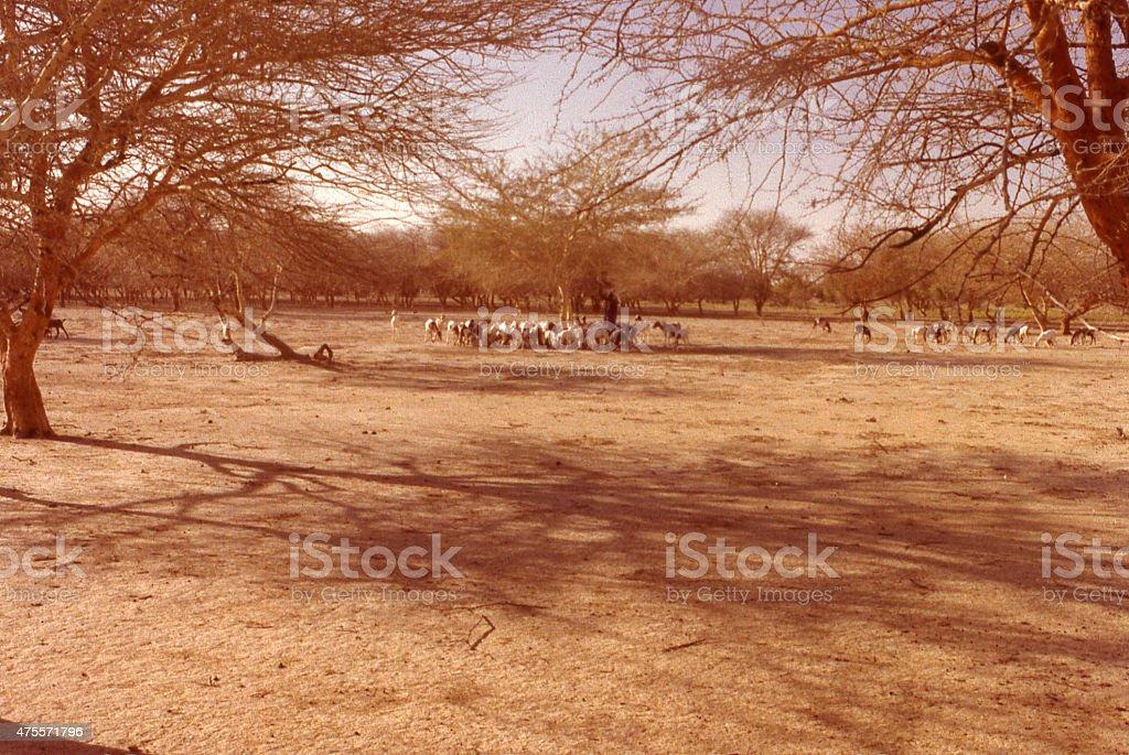 Deforestation desertification Great Sahelian Drought 1970s Burkina Faso West Africa stock photo