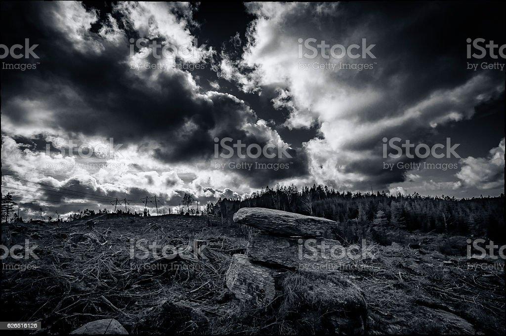 Deforestation disaster stock photo