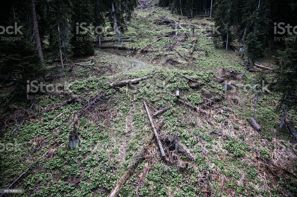 Deforestation environmental damage. Fir forest destroyed by human aerial view. stock photo