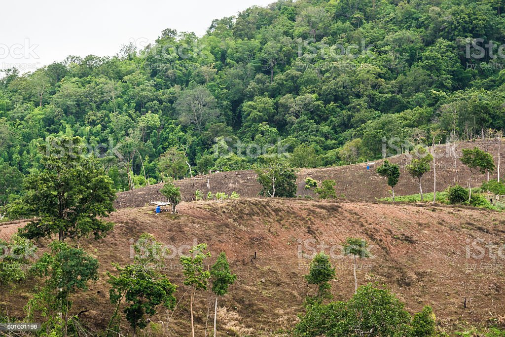 deforestation for shifting cultivation and bald mountain stock photo