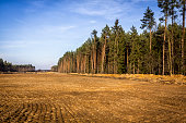 Deforestation in Poland
