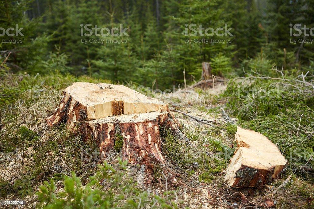 Deforestation in Romania stock photo