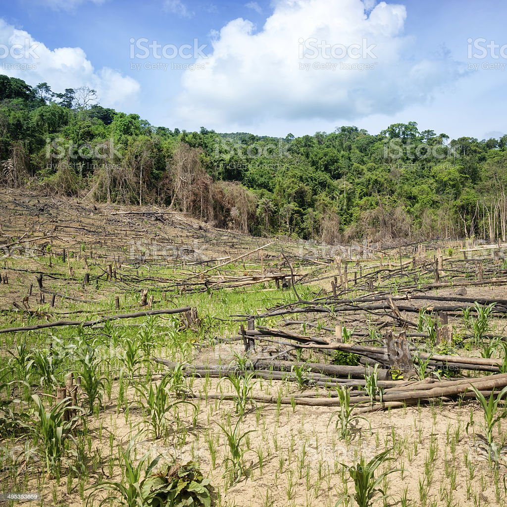 Deforestation in the Philippines stock photo