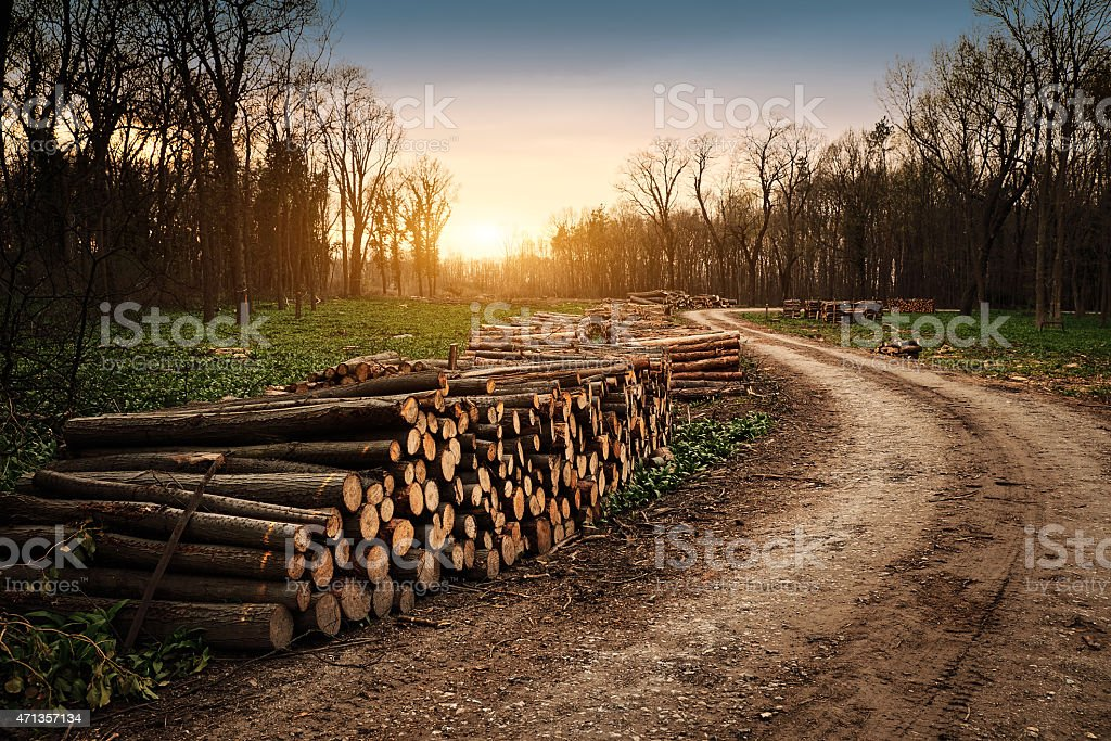 Deforestation industry stock photo