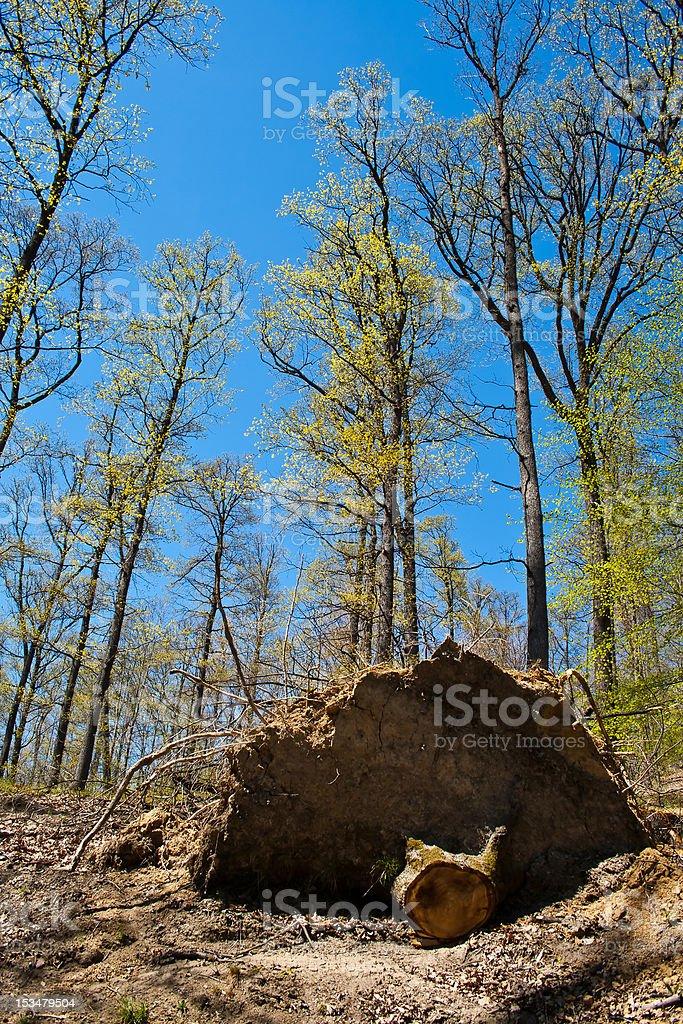 Desmatamento foto royalty-free