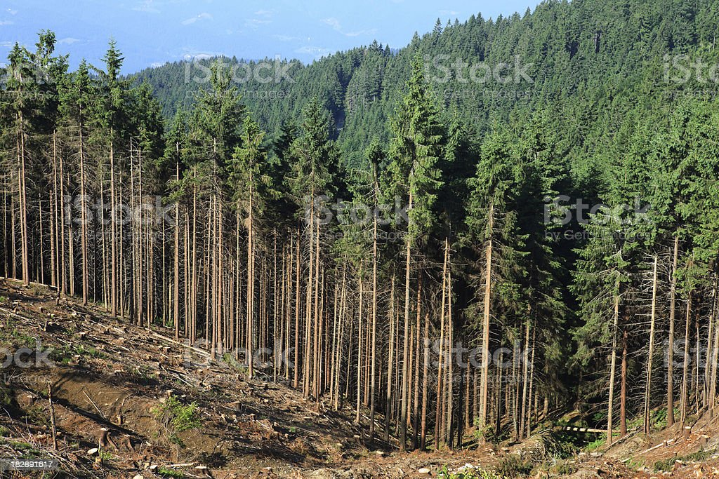 Deforestation royalty-free stock photo