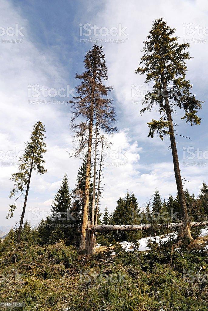 Deforestation royalty-free stock photo
