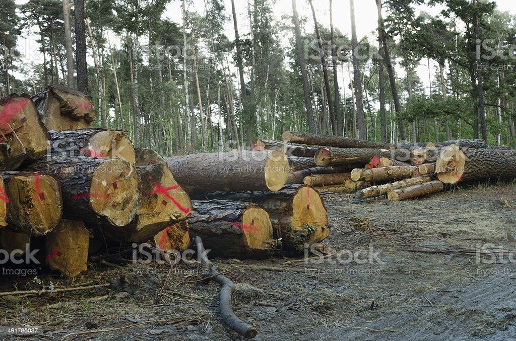 deforestation stock photo