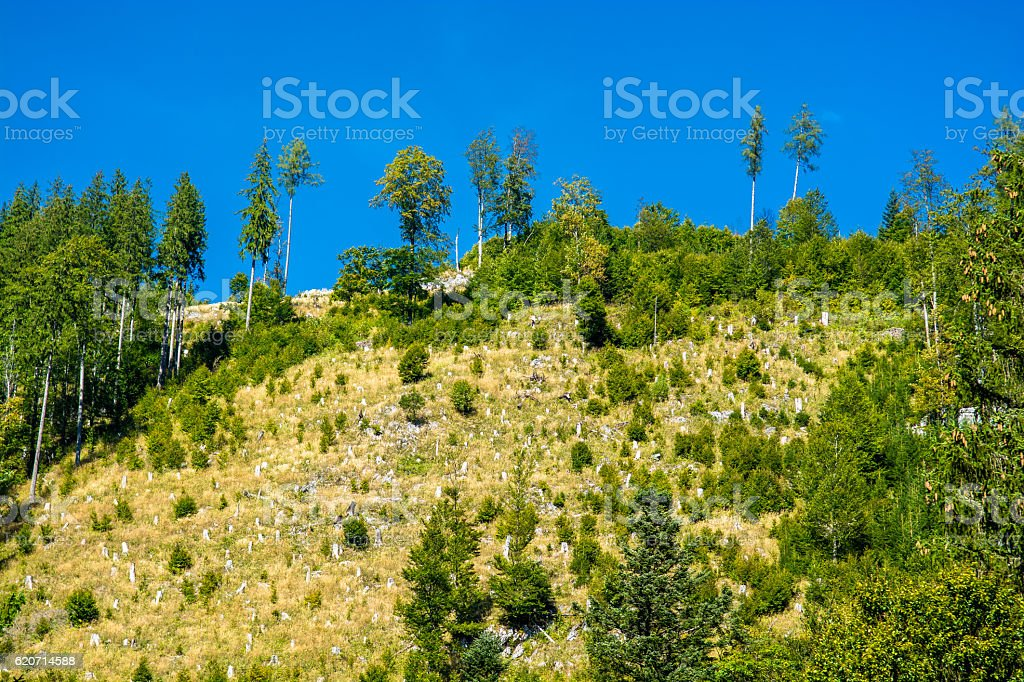 Deforestation with Reforestation on Mountain stock photo