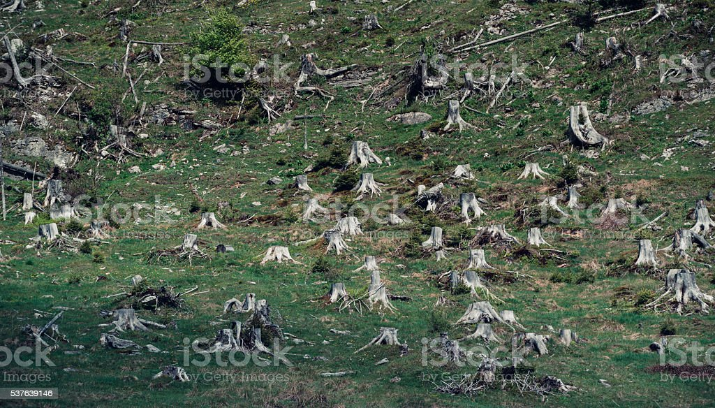 Deforested area stock photo