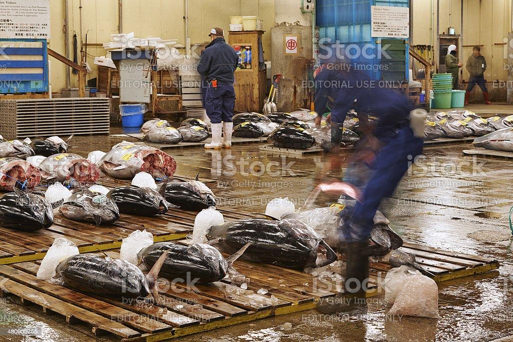 Defrosting Tuna stock photo