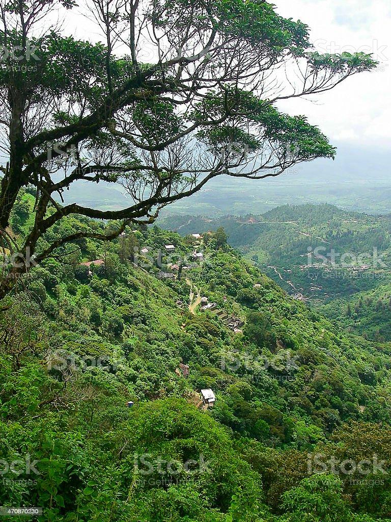 Degraded Forest and Coffee Plantations San Juancito La Tigra Honduras stock photo