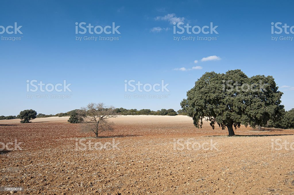 Dehesa in an agricultural landscape stock photo