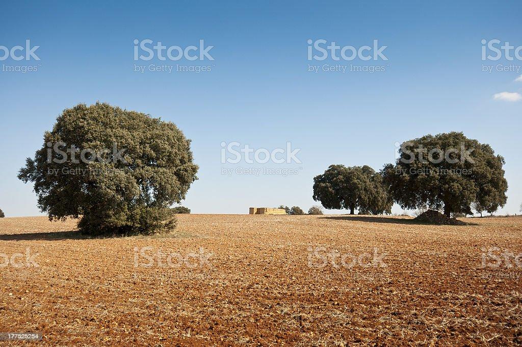 Dehesa stock photo