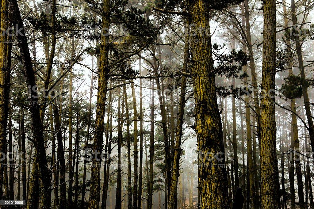 Del Monte Forest, Carmel, California stock photo