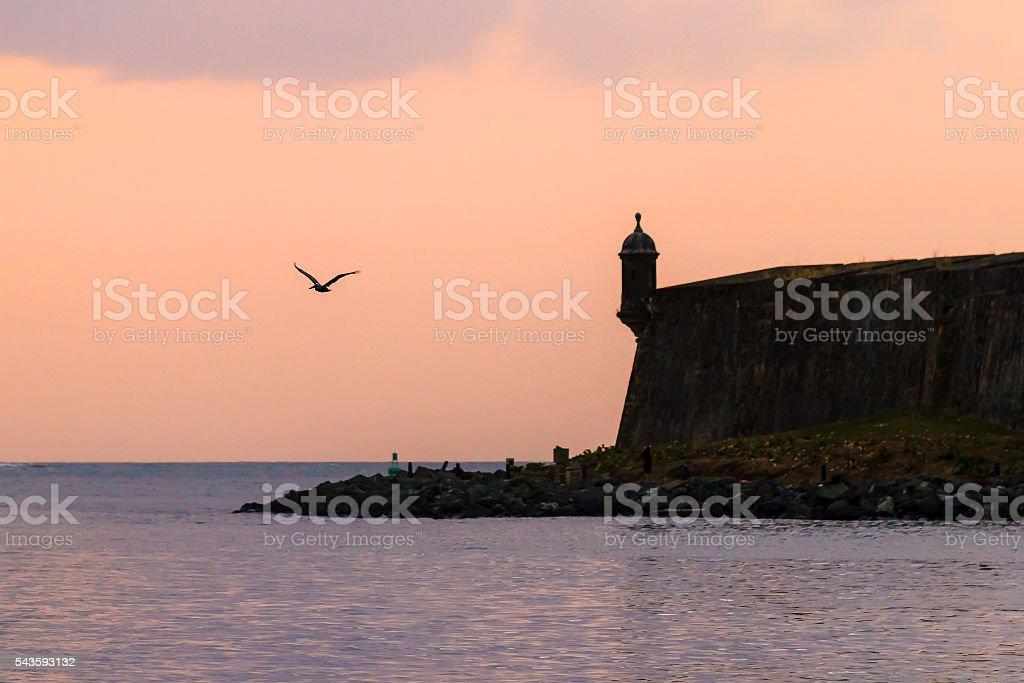 Del Morro pelican stock photo