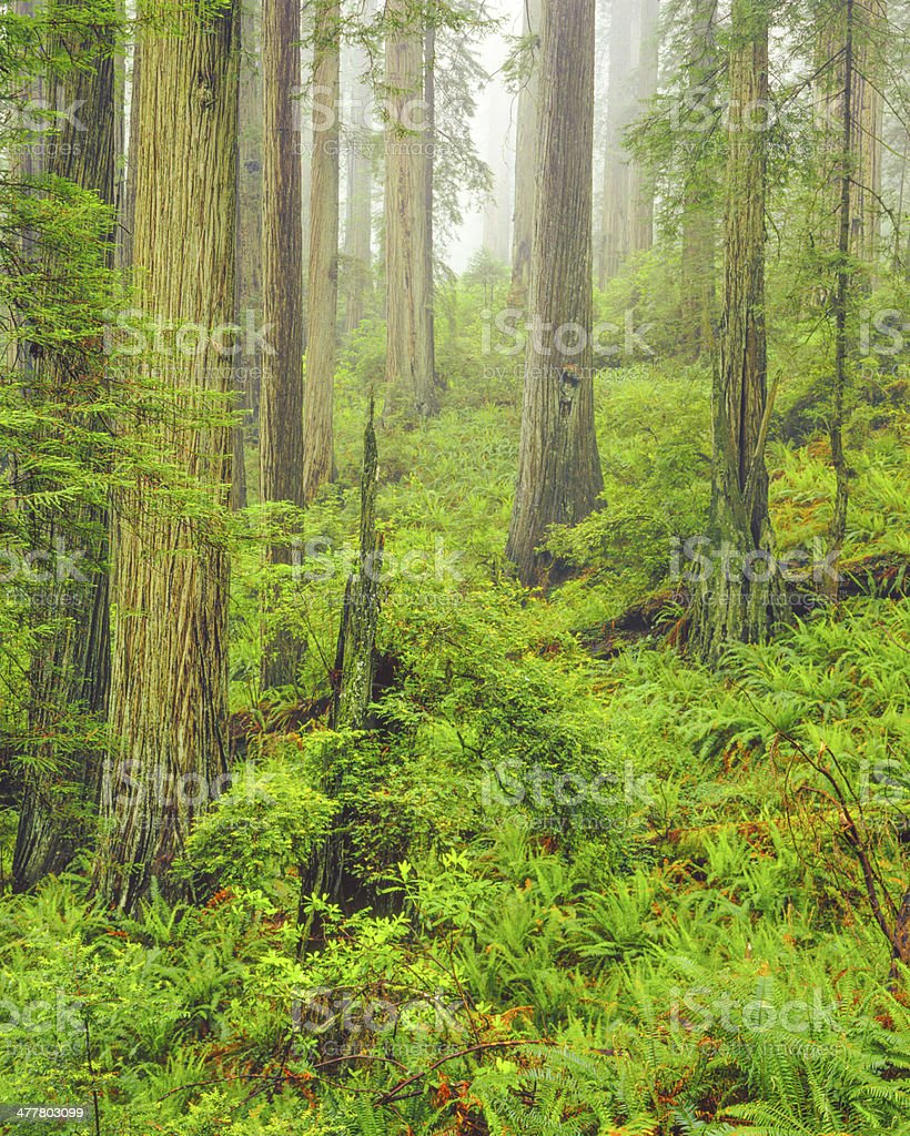 Del Norte Coast Redwood State Park stock photo