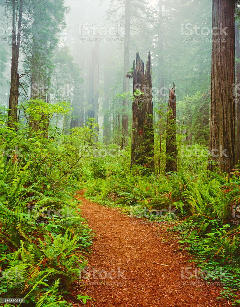 Del Norte Coast Redwoods St. Park royalty-free stock photo