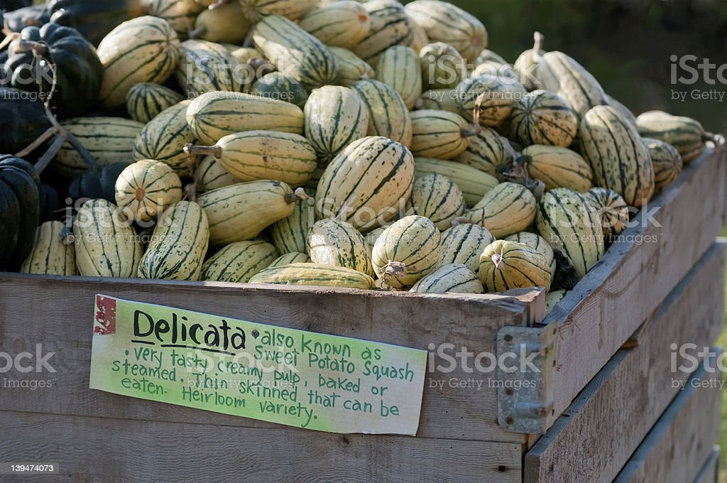 Delicata Squash at a Farm Market royalty-free stock photo