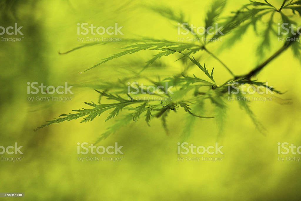 Delicate and bright royalty-free stock photo