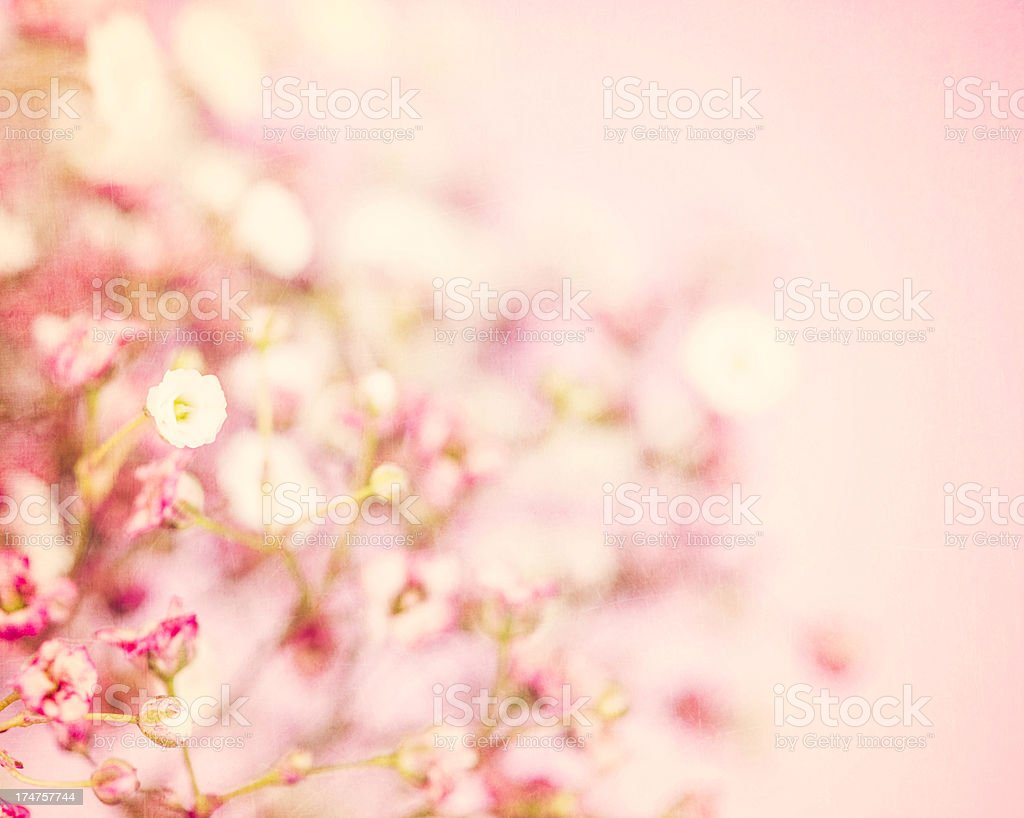 Delicate Baby's Breath Flowers royalty-free stock photo