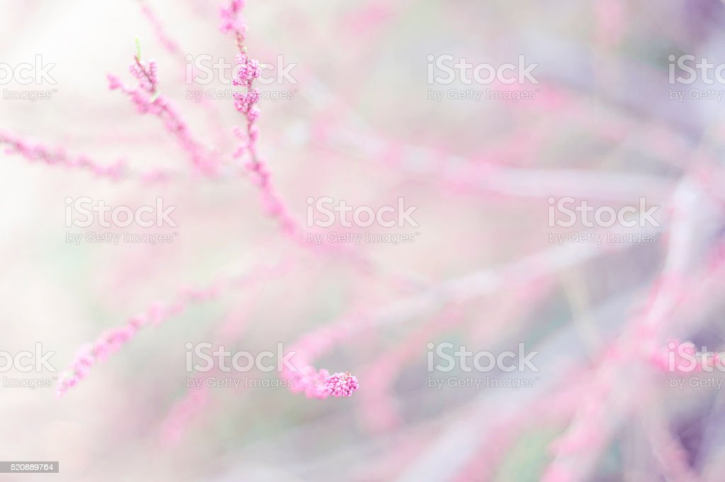 Delicate background with soft  light. Shallow depth of field stock photo