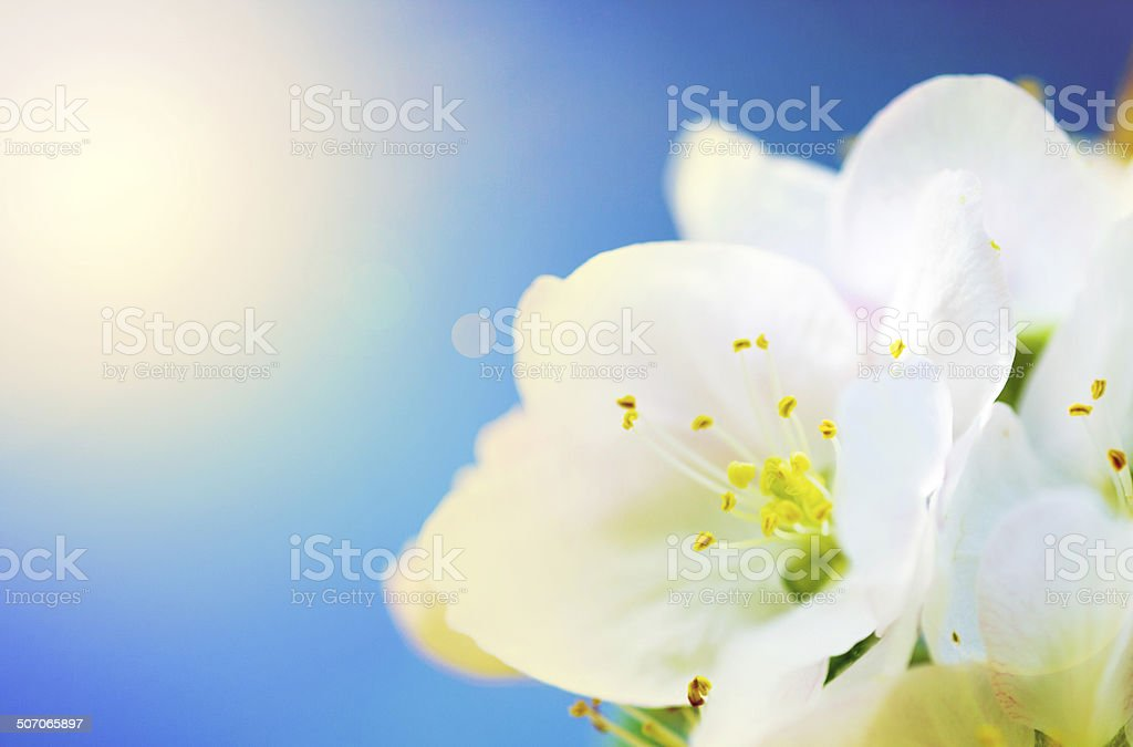 Delicate beauty stock photo
