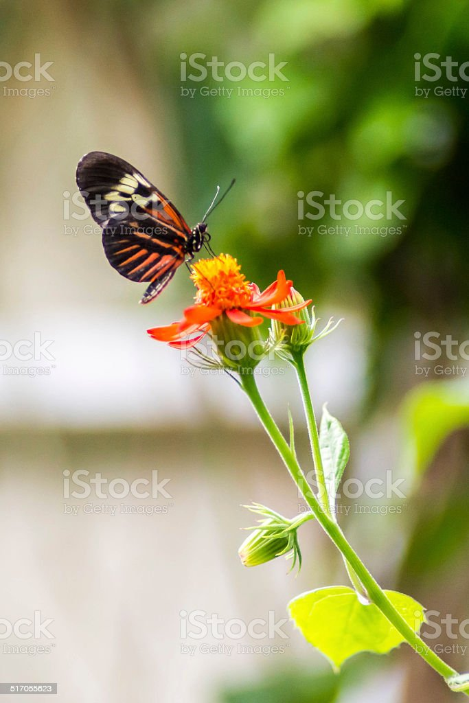 Delicate Butterfly stock photo